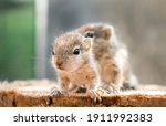 Small Squirrels Lost In The...