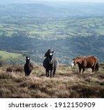 Wild Horses In The Beacons