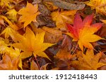 Up Of Fallen Leaves Of Wet...