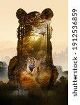 photograph of forest... | Shutterstock . vector #1912536859