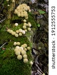 Three Clusters Of Small...