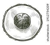 exotic fruit  isolated avocado... | Shutterstock .eps vector #1912754209