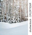 Winter Scene  Into The Woods...