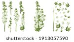 delphinium larkspur isolated on ... | Shutterstock .eps vector #1913057590