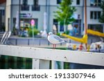 Front View Of A Seagull Sitting ...