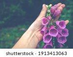 Digitalis Foxglove Flower In...