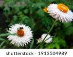 Bee  White Flowers  Beautiful...