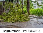 Trees Damaged And Uprooted...