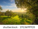 Maremma Countryside Panoramic...