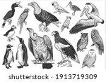 birds of wildlife set. eagles ...   Shutterstock .eps vector #1913719309