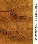 Close Up Brown Autumn Leaf...