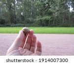 A Large Green Acorn That Has...