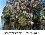 Spanish Moss Clings To Trees...