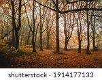 Leeds Middleton Park autumn leaves sunny way