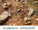 wet ground  yellow soil and... | Shutterstock . vector #1914231553