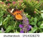 Closeup Butterfly On Flower ...