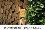 Natural Oak Stumps Are Stacked...