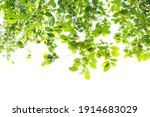 green leaf isolated on white... | Shutterstock . vector #1914683029