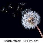 Blow Ball Of Dandelion Flower...