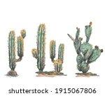Set Of Cacti  Sand  Hand Drawn...