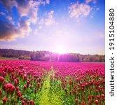 Field Of Flowering Crimson...
