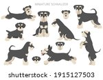 Miniature Schnauzer Dogs In...