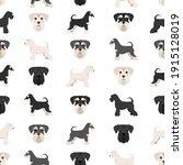 Miniature Schnauzer Dogs In...