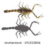 illustration with scorpion... | Shutterstock .eps vector #191523836