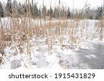Frozen Icey Pond In Forest With ...