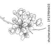 hand drawn branch of sakura... | Shutterstock .eps vector #1915984603