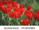red tulip | Shutterstock . vector #191602883