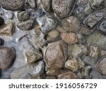 Close Up Picture Of Rock In The ...