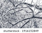 Ice Covered Tree Limbs From An...
