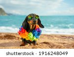 Adorable Dog Dachshund  Black...