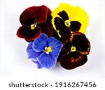 Colorful Pansy Flowers Viola...