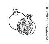 vector sketch of tropical...   Shutterstock .eps vector #1916342873