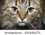 portrait of a cat. | Shutterstock . vector #191636273