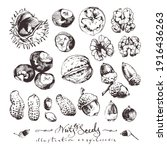 vintage drawings of nuts and... | Shutterstock .eps vector #1916436263