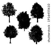 set of silhouettes of trees on... | Shutterstock .eps vector #1916455610
