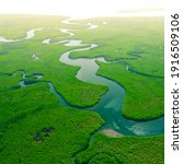 Aerial View Of Green Mangrove...