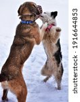 Dog Waltz In The Snow Two Dogs...