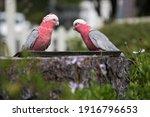 Birds Feeding From Vintage...