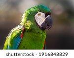 Beautiful Colorful Parrot Bird...