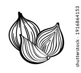illustration of onions. whole... | Shutterstock .eps vector #1916864153