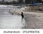 Cormorant Preparing To Swim On...