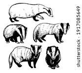 hand drawn badger  meles meles ....   Shutterstock .eps vector #1917085649