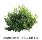 Tropical Plant Flower Bush Tree ...