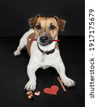 Jack Russell Dog Draws A Heart