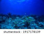 School Of Fish Underwater Photo ...