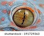 Toke's Gecko Amazing Eye Macro